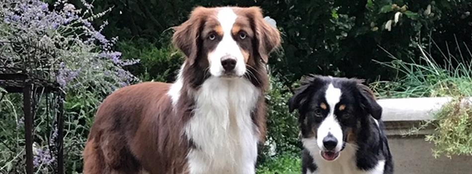 Barkin Dogs Rescue